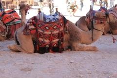 CamelPetra